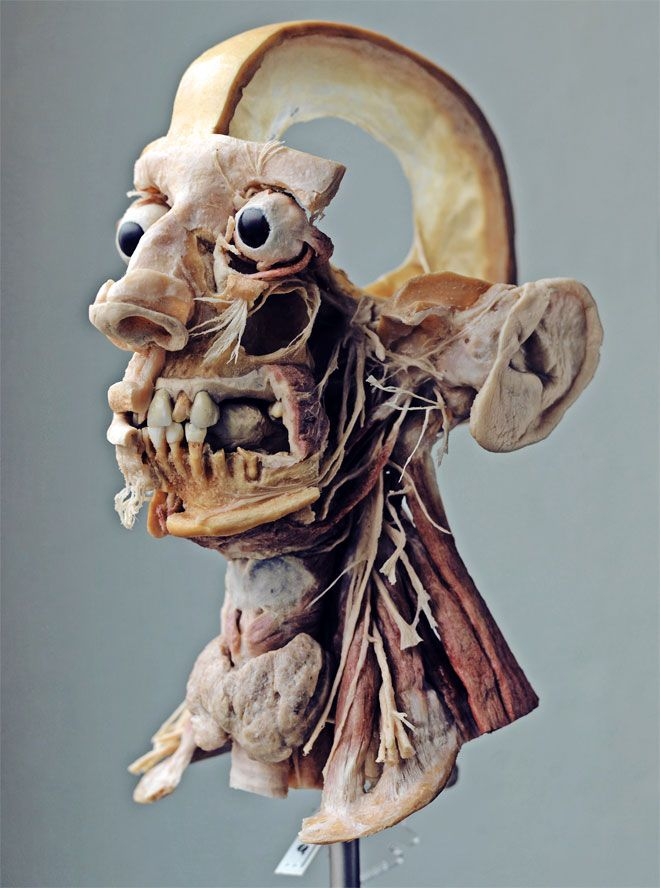 'the plastinarium of dr. von hagens' - daniel engber, 2013 [wired article; the mortality of gunter von hagens and his plastinarium; link to slideshow of images]