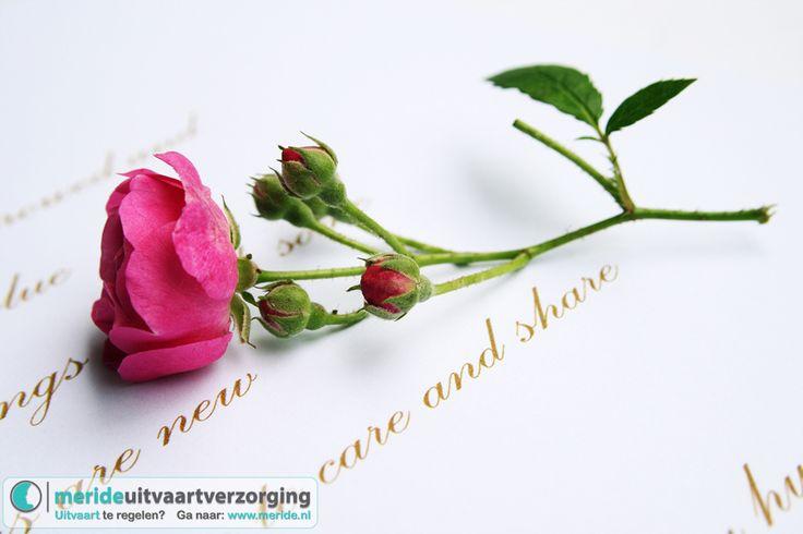 Een bloem ter nagedachtenis aan uw overleden dierbare