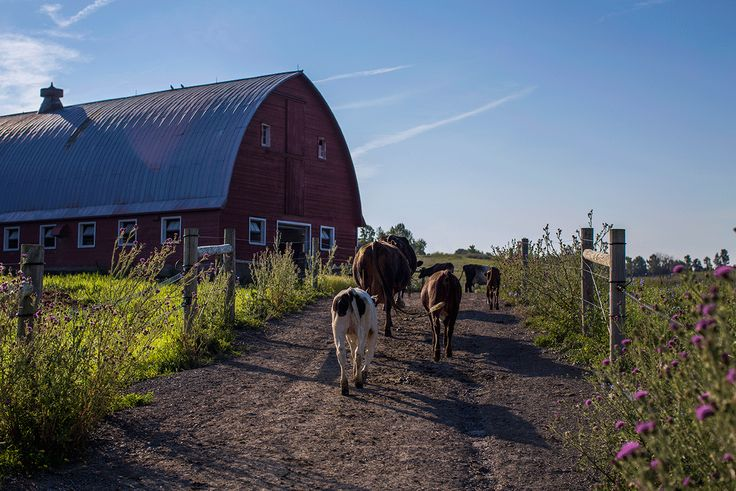 Do you know your farmer? What to look for in the dairy aisle.