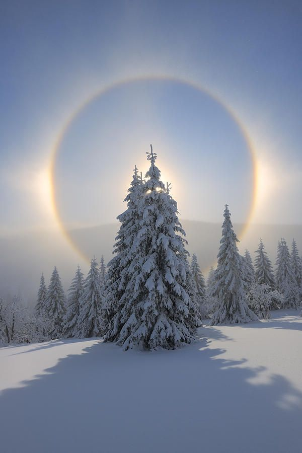 Halo and snow covered pine trees, Fichtelberg, Ore Mountains, Saxony, Germany
