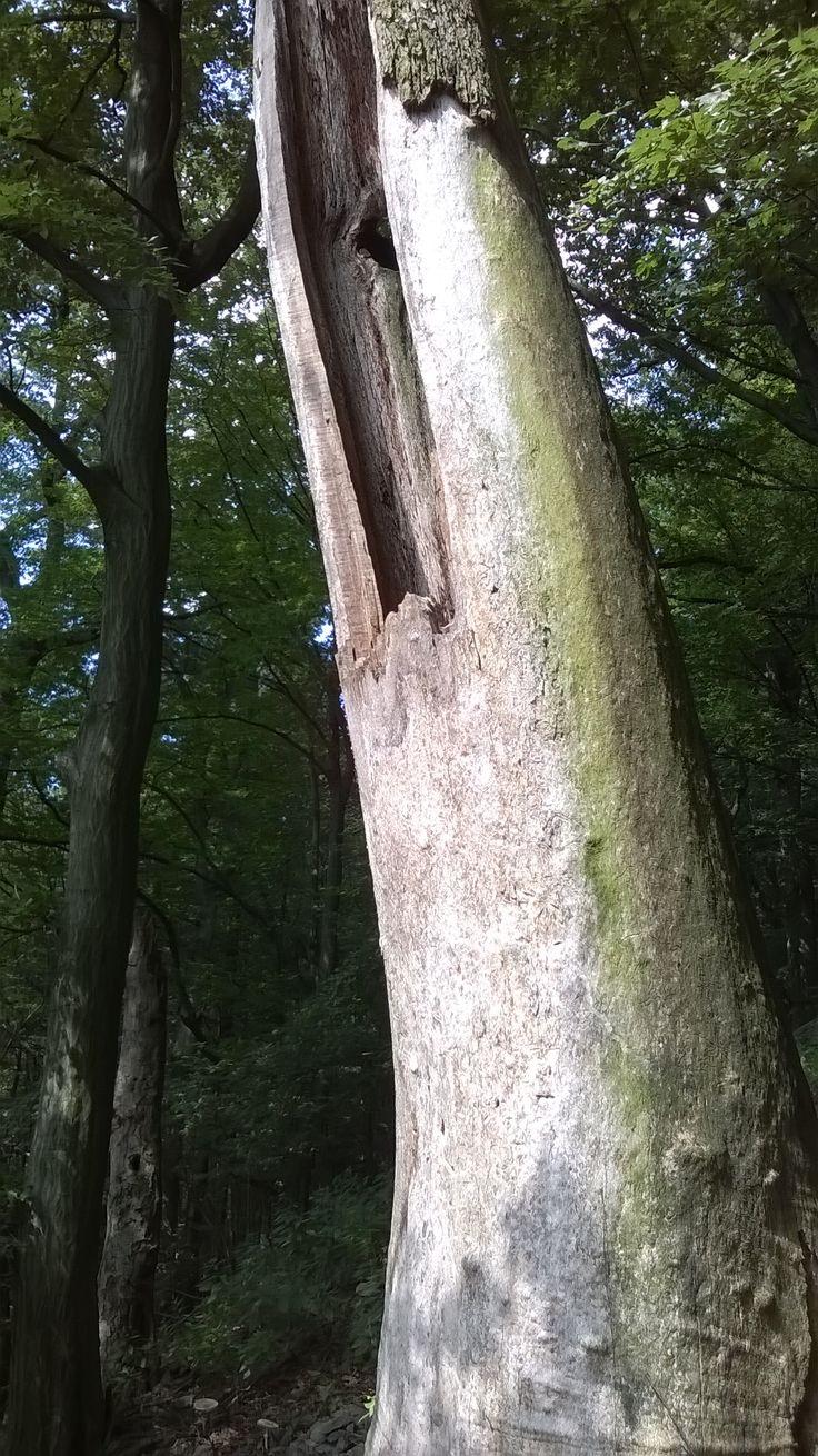 Tree with hole./Strom s dutinou.