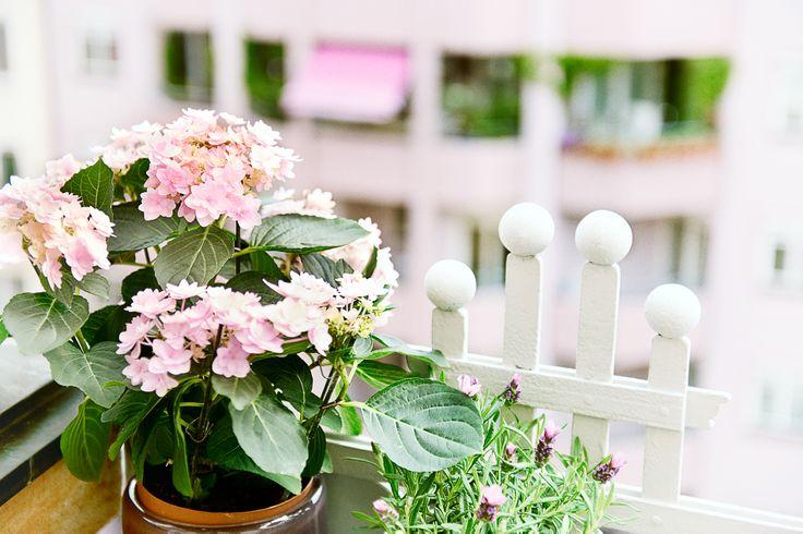 lieblingsplatz sommerbalkon interieur pinterest balkon und mein liebling. Black Bedroom Furniture Sets. Home Design Ideas