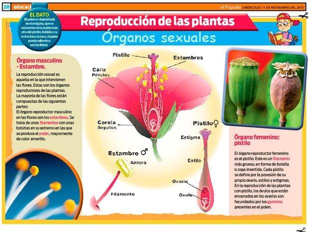 sexualidad de las plantas
