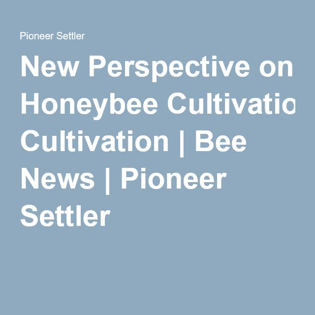 New Perspective on Honeybee Cultivation | Bee News | Pioneer Settler