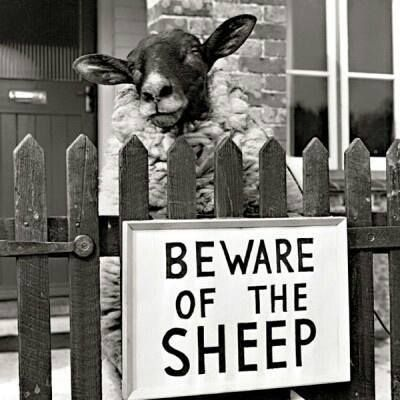 """I need one that says """"Beware of the Goats"""""""