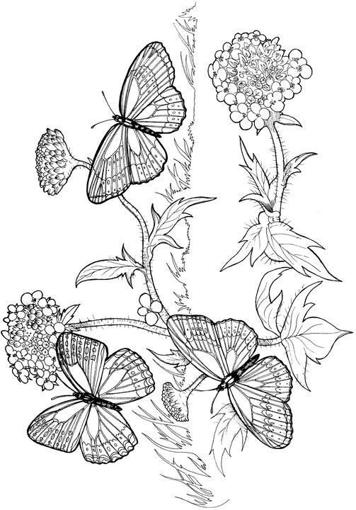 advanced coloring pages for adults who like to color adult coloring pages to print - Advanced Coloring Pages Butterfly