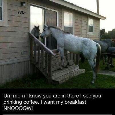 Something similar happened to me. I had a wooden screen back screen door that led to my kitchen and my horse, grabbed the handle with his teeth and came inside my kitchen.