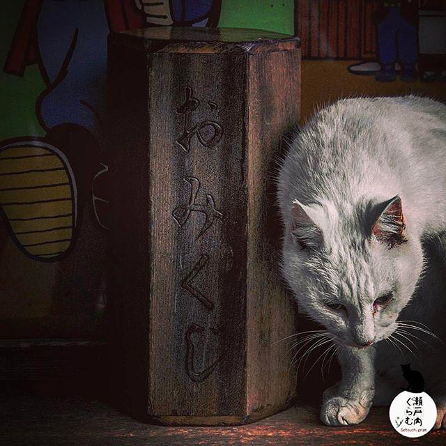 ・ ・ ・ ──────────────────── ◇2月特集◇ #瀬戸内ねこ日和2 ──────────────────── 素敵な瀬戸内の風景と一緒に写る猫のお写真 を大募集します👍✨✨ * ◉お写真にはキャプションやジオタグにて場所や名称を必ず記載下さい🙏🏻 * 素敵なお写真どしどしお寄せ下さいね!お待ちしています✨✨ * ──────────────────── photo by : @hirothy18 * location : *岡山県岡山市吉備津神社 ──────────────────── photo selected by @satoshi_1123 * ──────────────────── 皆様のお写真で瀬戸内の魅力を広めていきましょう @setouchigram ⬅︎フォロー #setouchigram36⬅︎只今のタグ ・ ⚠️キャプションやジオタグにて必ずロケーションを明記下さい ⭕️例) 美観地区(岡山県倉敷市) ❌例) 岡山県 ・ ──────────────────── @hirothy18…