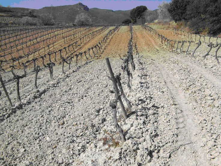 478 best cata de vino images on pinterest drinks for Caracteristicas de los suelos