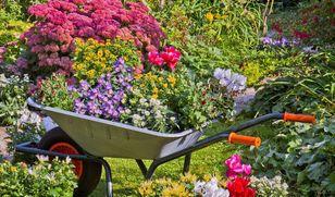 Rady na każdy temat związany z ogrodem