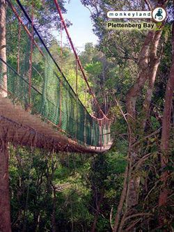MONKEYLAND, Garden Route - BelAfrique your personal travel planner - www.BelAfrique.com