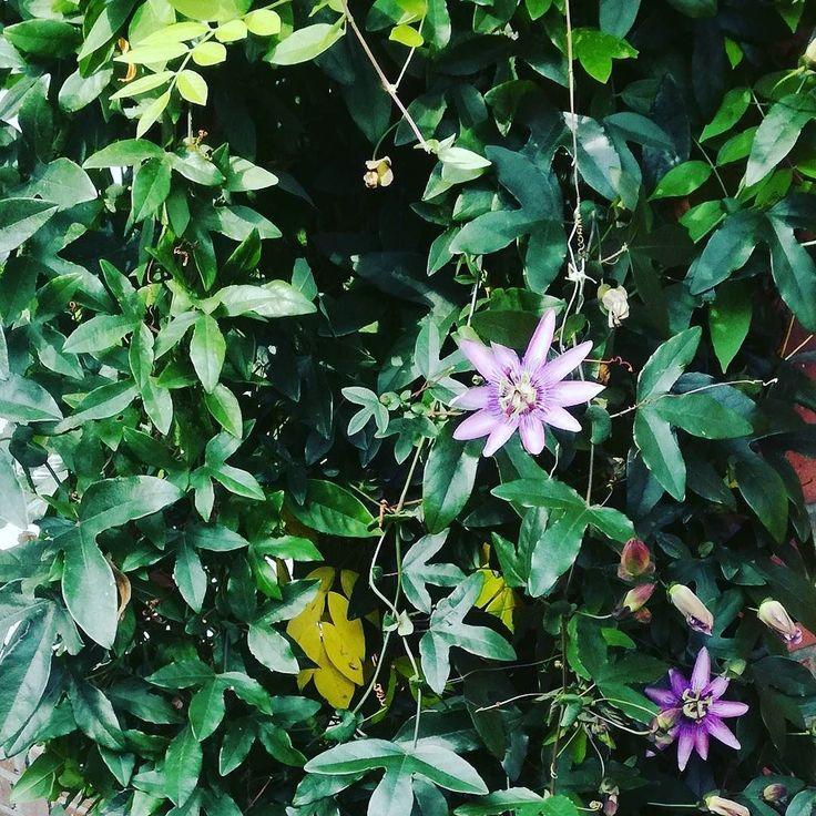 Krzew niezwykłych kwiatów.  #dianapozytywnie