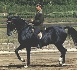 Absent - Golden olympic medal in dressage on Olympic Games in Roma in 1960, third place on OG in Tokio in 1964 (in both starts under Sergei Filatov), fourth place on OG in Mexico in 1968 (under Ivan Kalita)