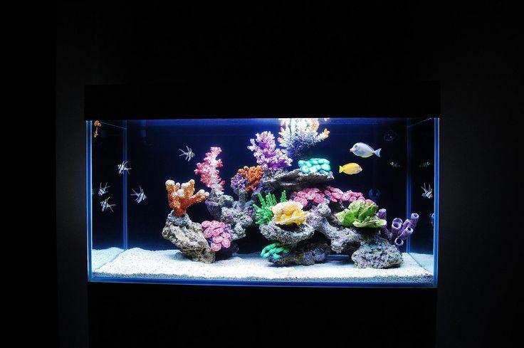 Wykonujemy akwaria słodkowodne imitujące akwaria morskie. Sprowadzamy najwyższej jakości sztuczne dekoracje z USA, które bywają nie do odróżnienia od żywych korali. Są to odlewy naturalnych korali wykonane ze specjalnej żywicy. Dzięki temu zwyczajne akwarium może wyglądać jak tętniąca życiem rafa koralowa! Akwarium takie jest nieporównywalnie tańsze w realizacji i prostsze w utrzymaniu niż prawdziwy zbiornik morski.