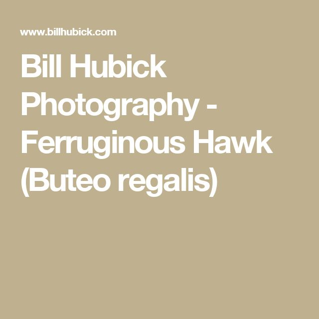 Bill Hubick Photography - Ferruginous Hawk (Buteo regalis)