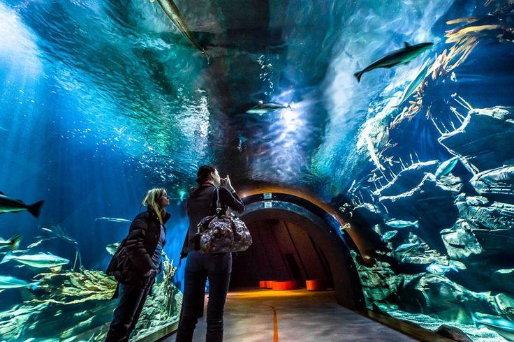 """Stralsund: Das Ozeaneum ist eine Erfolgsgeschichte: 2008 auf der Stralsunder Hafenhalbinsel eröffnet, wurde es bereits 2010 """"Europas Museum des Jahres""""."""