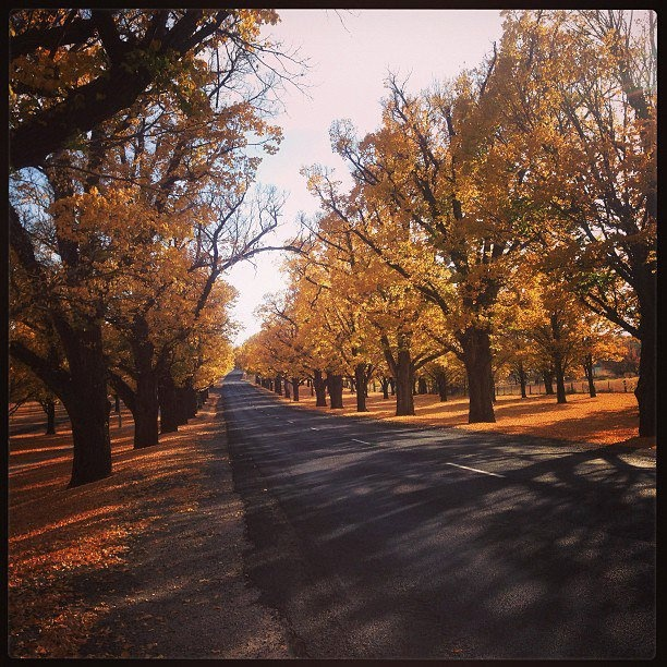 The colours of Autumn have spread over the UNE campus, such a beautiful time of year in Armidale, New South Wales