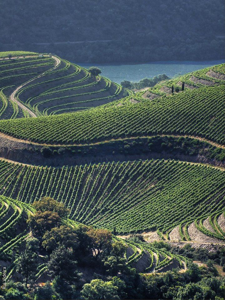 #Portugal, #Portvineyards in Douro valley by Rui Videira. That was even way more beautiful than this x)