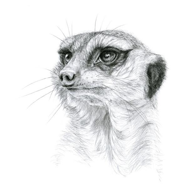 17 Best Images About Meerkat Puppet On Pinterest