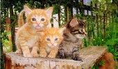 Katzen Kätzchen Ingwer blaue Augen süße Tiere wilde Tiere Planet Erde na …   – Adorable Kittens