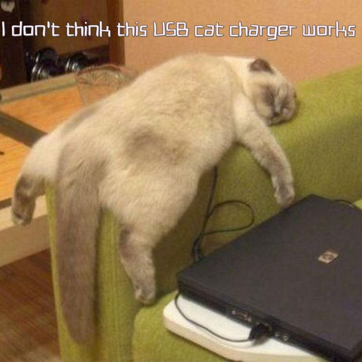 I don't think this USB cat charger works.