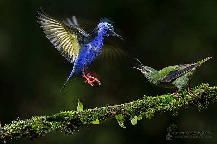 Top 14 Bird Photographers in the World, their Achievements, and their Goals! - Nature Photography Simplified