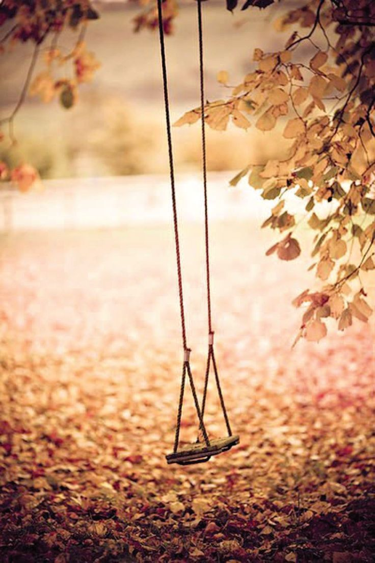 Tree swing meme what the customer really wanted - 287 Best Swings Images On Pinterest Country Life Country Living And Tree Swings