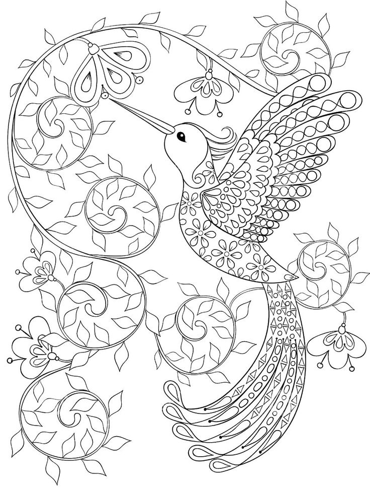 Adult Coloring Pages HummingBird