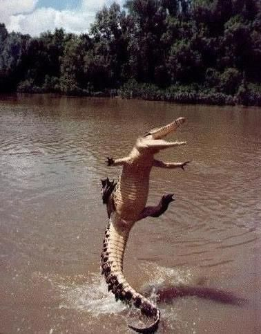 Happiest alligator in history. Never thought I'd see an alligator smile! :)