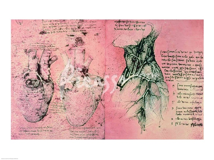 Anatomical drawing of hearts and blood vessels by Leonardo Da Vinci art print