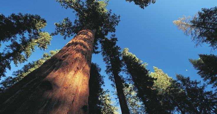 Características de ecosistemas forestales primarios. Los bosques primarios representan uno de los ecosistemas forestales variados del mundo. Los bosques primarios son puestos o tractos de bosque que no han sido alterados por la tala u otras ocurrencias naturales desde hace más de 100 años. Los tipos de ecosistemas forestales primarios en los Estados Unidos van desde bosques de piceas y abetos del ...