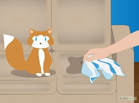 Remove the Smell of Cat or Dog Urine from Upholstery Step 1.jpg