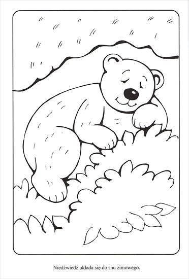 Coloring Winter Animals : 168 best winter: hibernate animals images on pinterest
