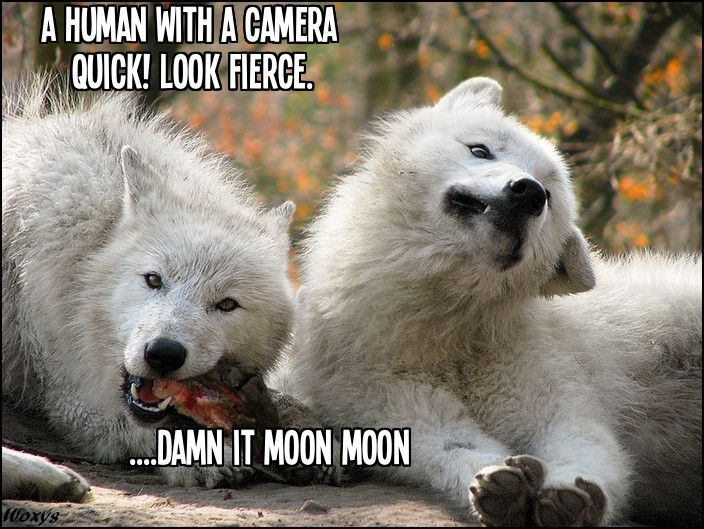 Moon Moon doesn't get it