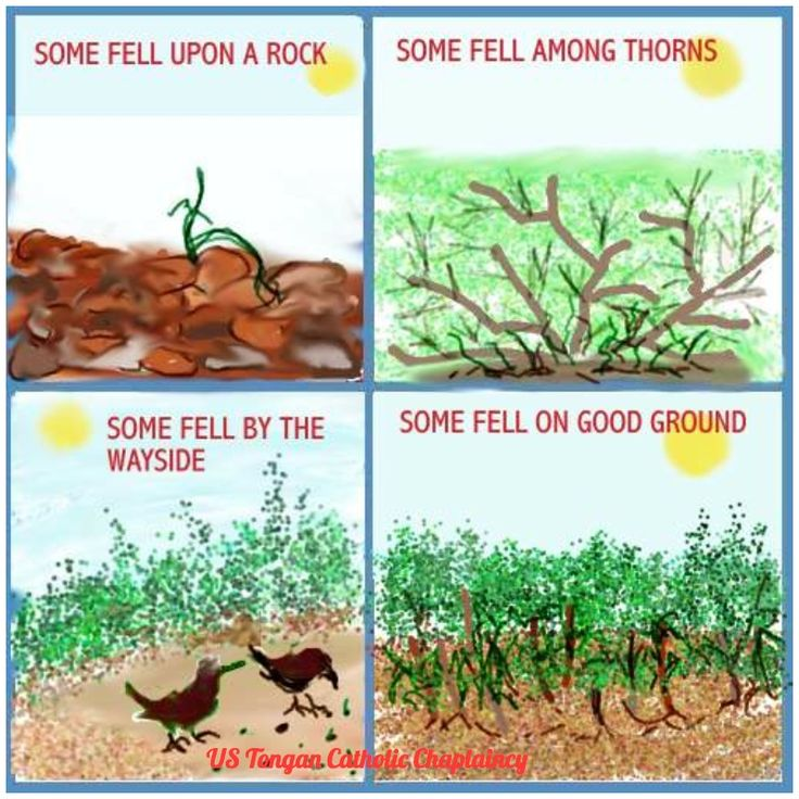 14 best parable of the sower images on pinterest bible for Soil 4 youth