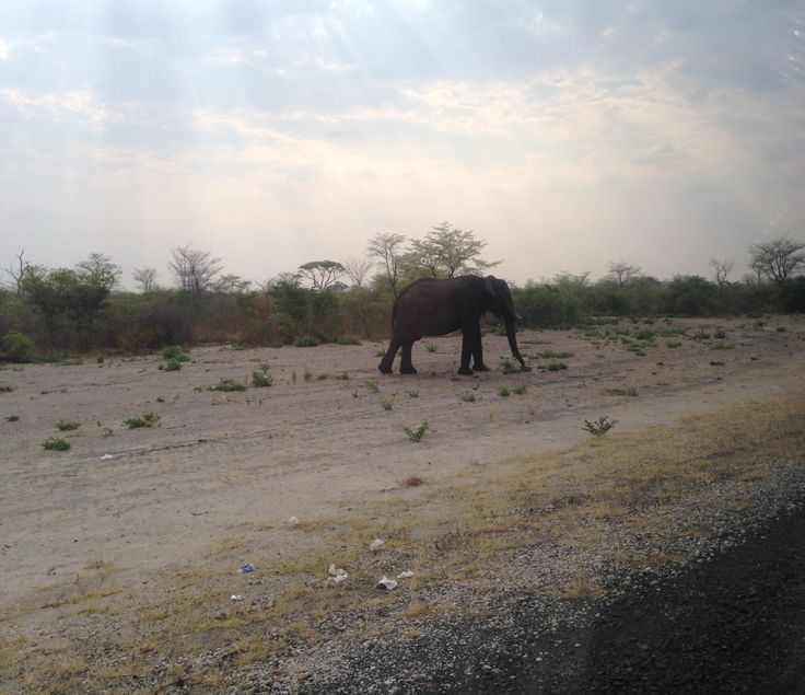 Elephant beside the road