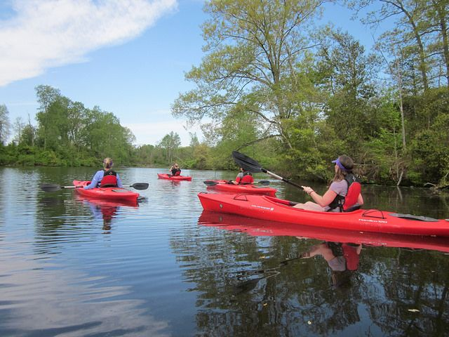 Kayaking is a neat way to glide quietly through the water for wildlife viewing and exercise at Westmoreland State Park, Virginia