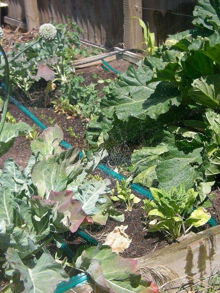 Veggie Garden Soaker Hose Irrigation - Step by step instructions