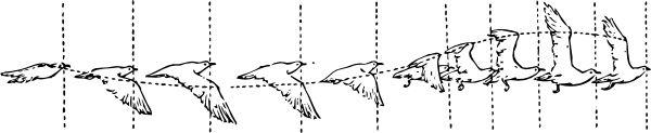 animation walk cycles flying bird 12362688701646140515johnny_automatic_bird_in_flight.svg.hi.png (600×123)