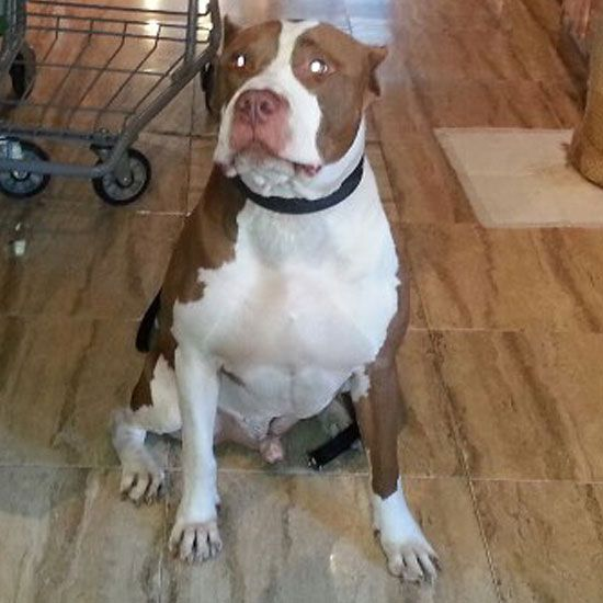 Mejores 37 imgenes de dog grooming in brooklyn ny en pinterest brooklyn peluquera de perros perros solutioingenieria Images