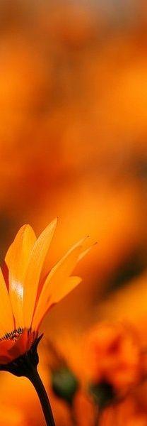 Orange 52ebfe58752fbbb8a7bd4fcf0ca25433.jpg (208×600)