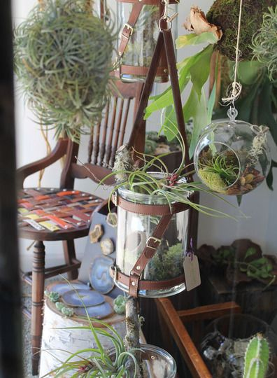 Air plant array....my fav is the hanging air plant ball.   #airplants #tillansdia
