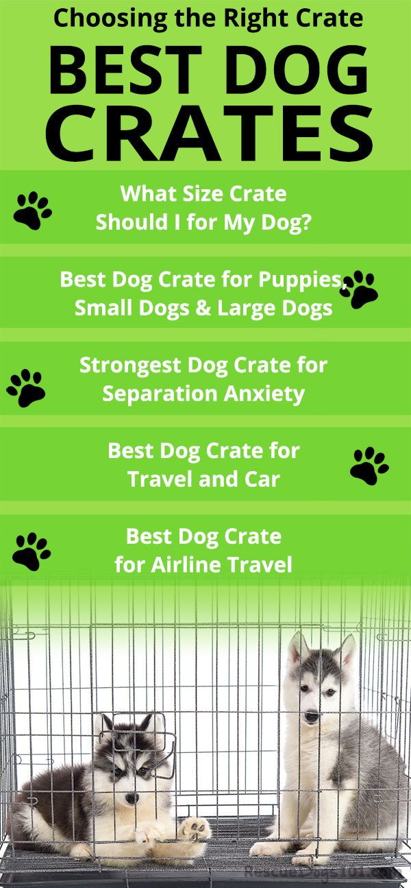 Finding The Best Dog Crate For Your Dog Training Your Puppy