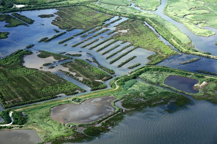 Reserve ornithologique du Teich | par Bassin d'Arcachon