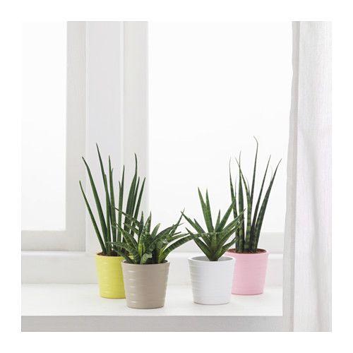 Les 25 meilleures id es de la cat gorie sansevieria plant - Plante d interieur ikea ...