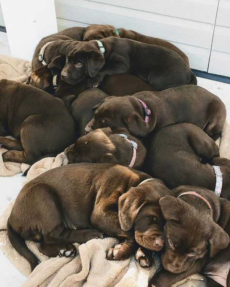 I want them all!