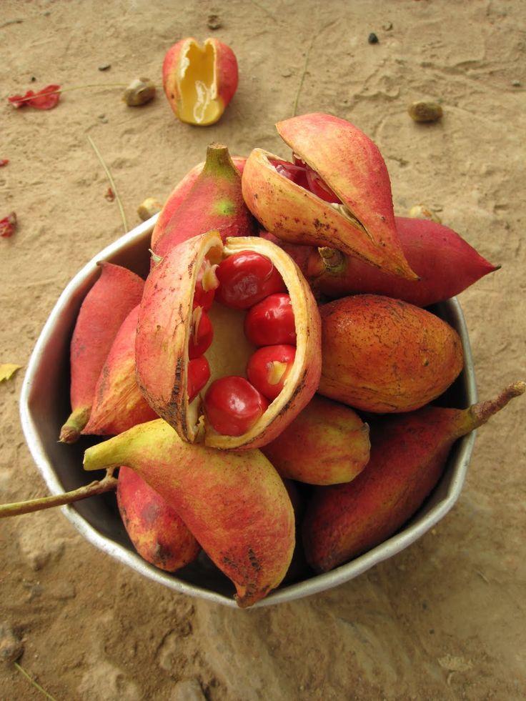 Tabacoumba, fruta Africana