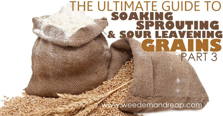 The Ultimate Guide to Soaking, Sprouting, & Sour Leavening Grains - Part 3 : Sprouting