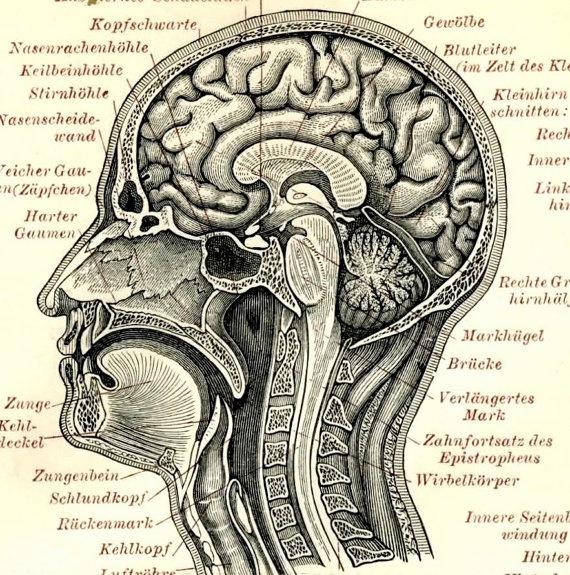 The 302 Best Anatomy Images On Pinterest Nursing Human Anatomy