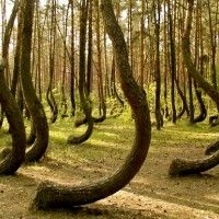 """""""The Hoia-Baciu Forest is located near Cluj-Napoca, Romania and is locally referred to as the Bermuda Triangle of Romania. Hoia Baciu Forest, has a reputation for paranormal activity. Reports have included, among others, folk ghost stories, apparitions, faces identified in photographs that were not visible with the naked eye, and, in the 1970s, UFO sightings."""""""